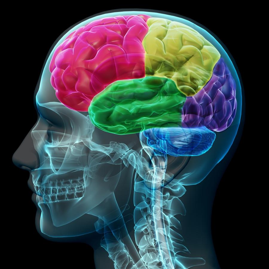 Come la cannabis colpisce il cervello